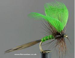Green Drake Mayfly