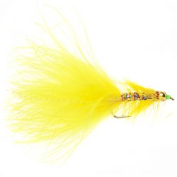 Goldhead Yellow Dancer