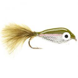 Janssen's Minnow - Rainbow Trout