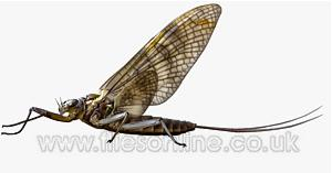 Turrall Fly Selection - Mayflies